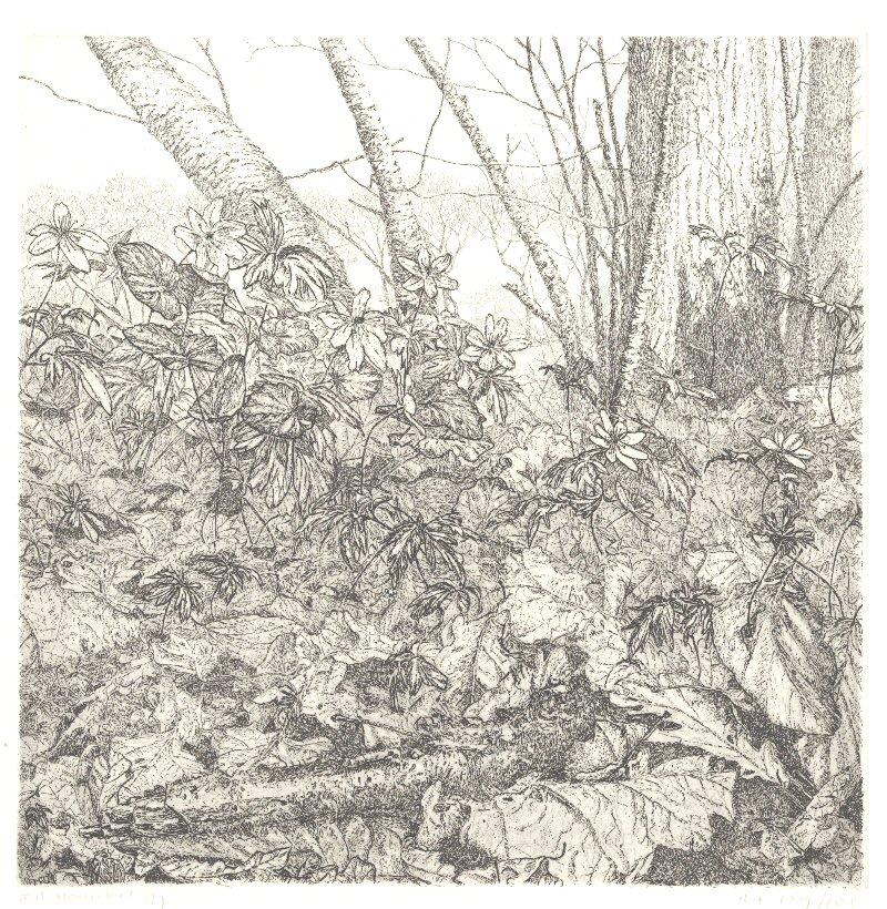 Bloemenweide en bosanemoon