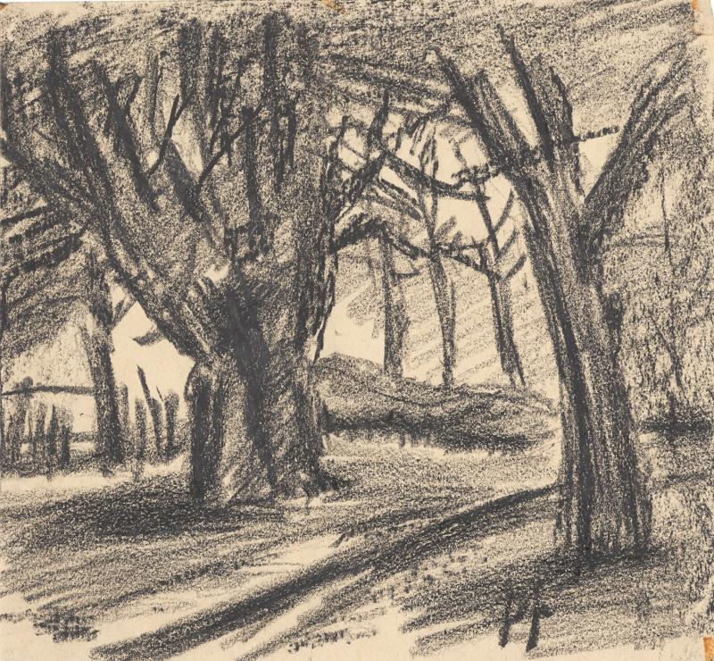 Een bomenlandschap