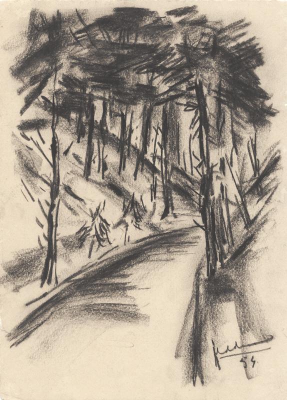 Een pad in een bomenlandschap