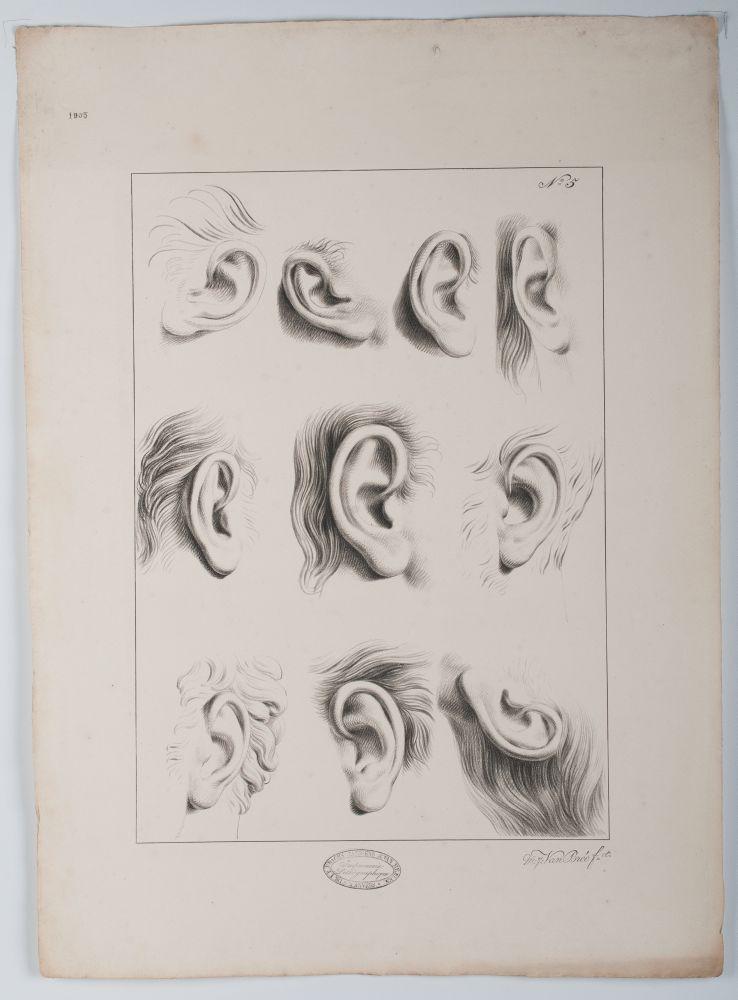 Tekenvoorbeeld van verschillende oren