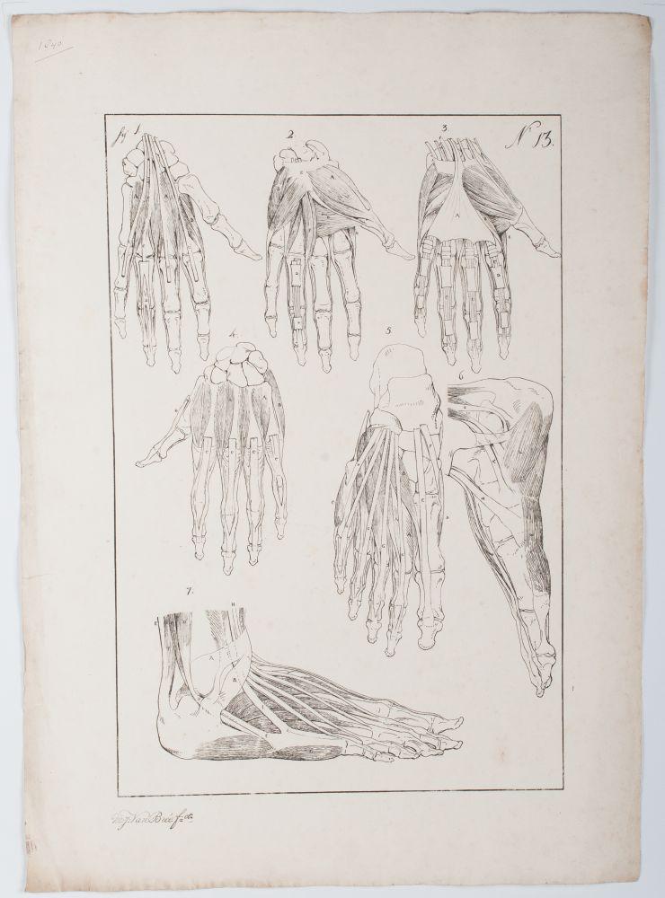 Tekenvoorbeeld van handen en een voet