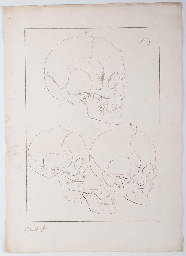 Tekenvoorbeeld van drie schedels