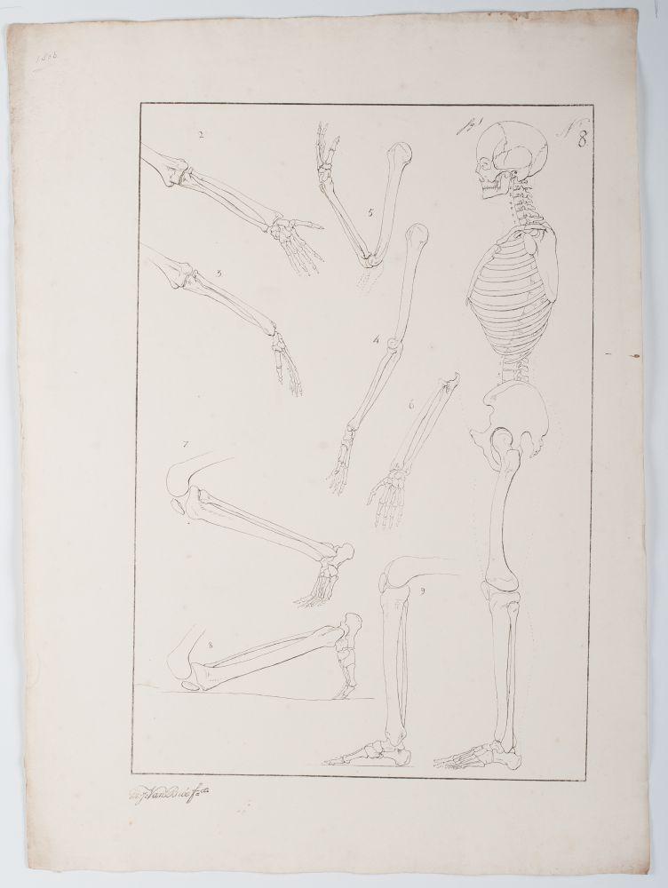 Tekenvoorbeeld van een staand skelet