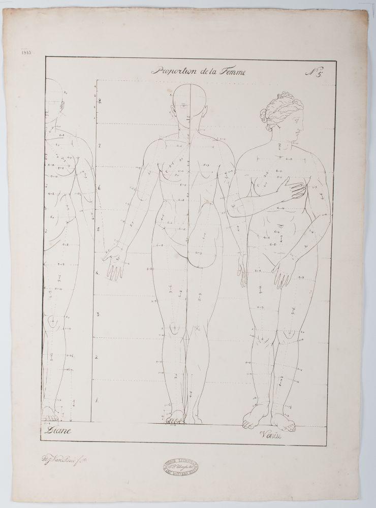 Tekenvoorbeeld van de proporties van het vrouwelijk lichaam
