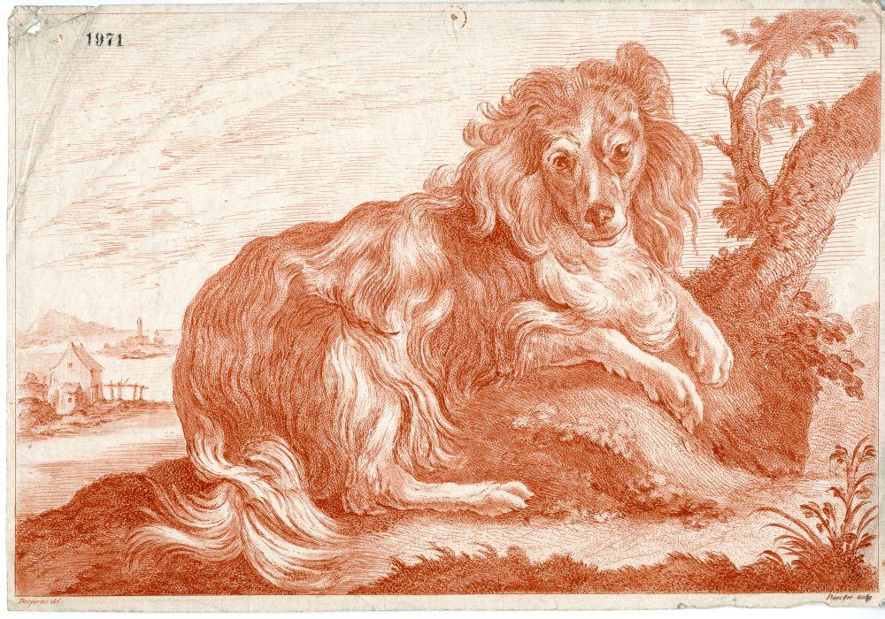 Tekenvoorbeeld van een hond