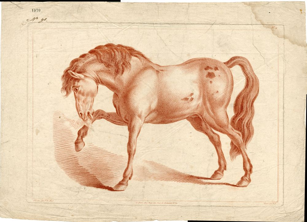 Tekenvoorbeeld van een paard