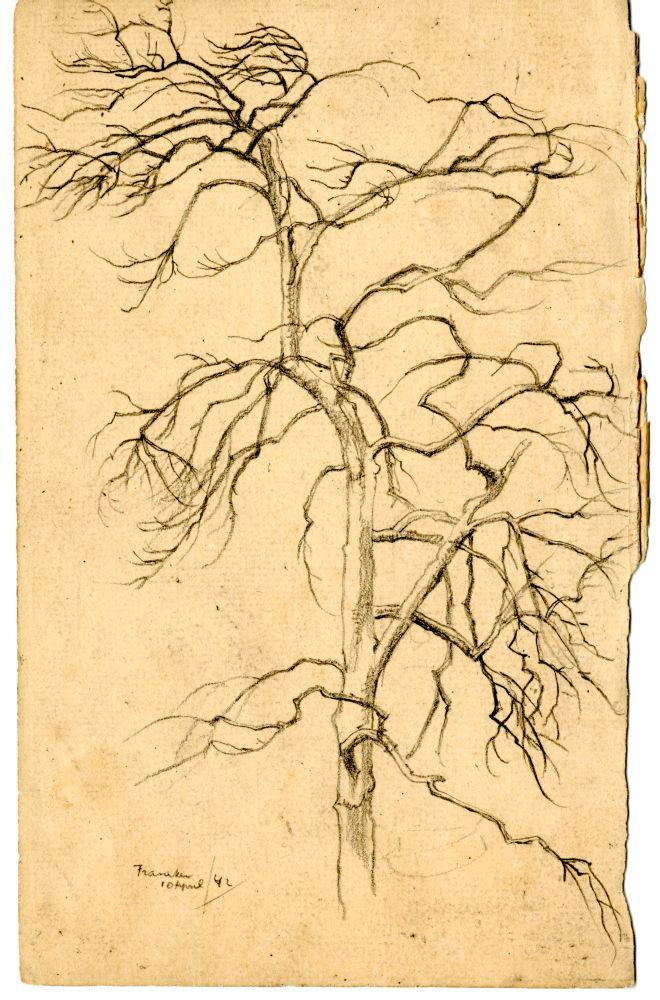 Tekening met potlood van een kale boom in Franeker door Sjoerd Kuperus