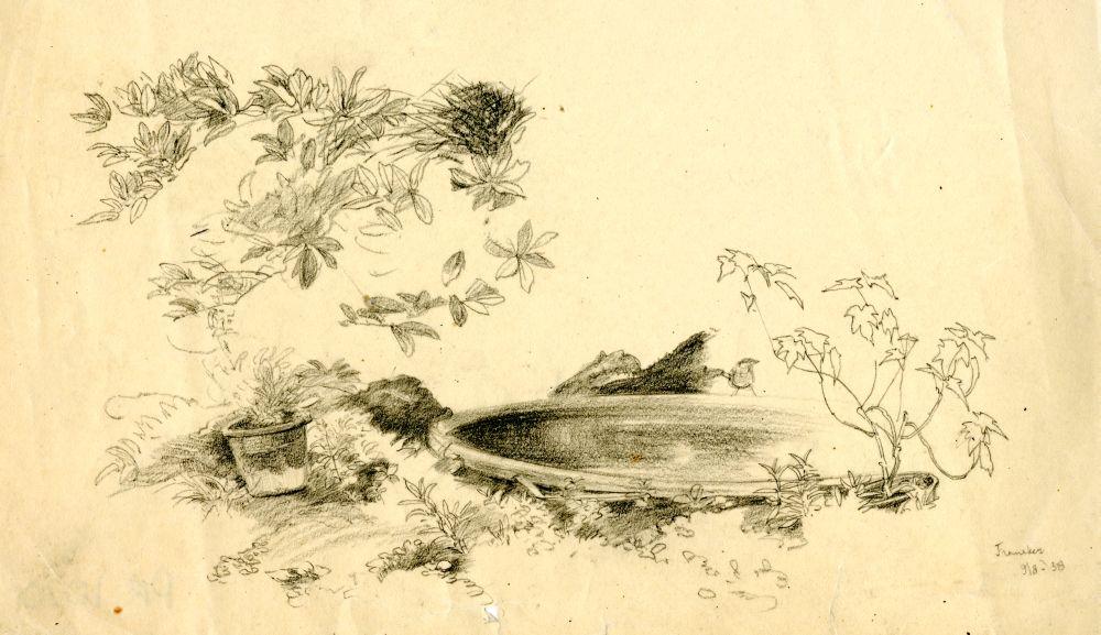 Tekening met potlood van een vijver in Franeker door Sjoerd Kuperus