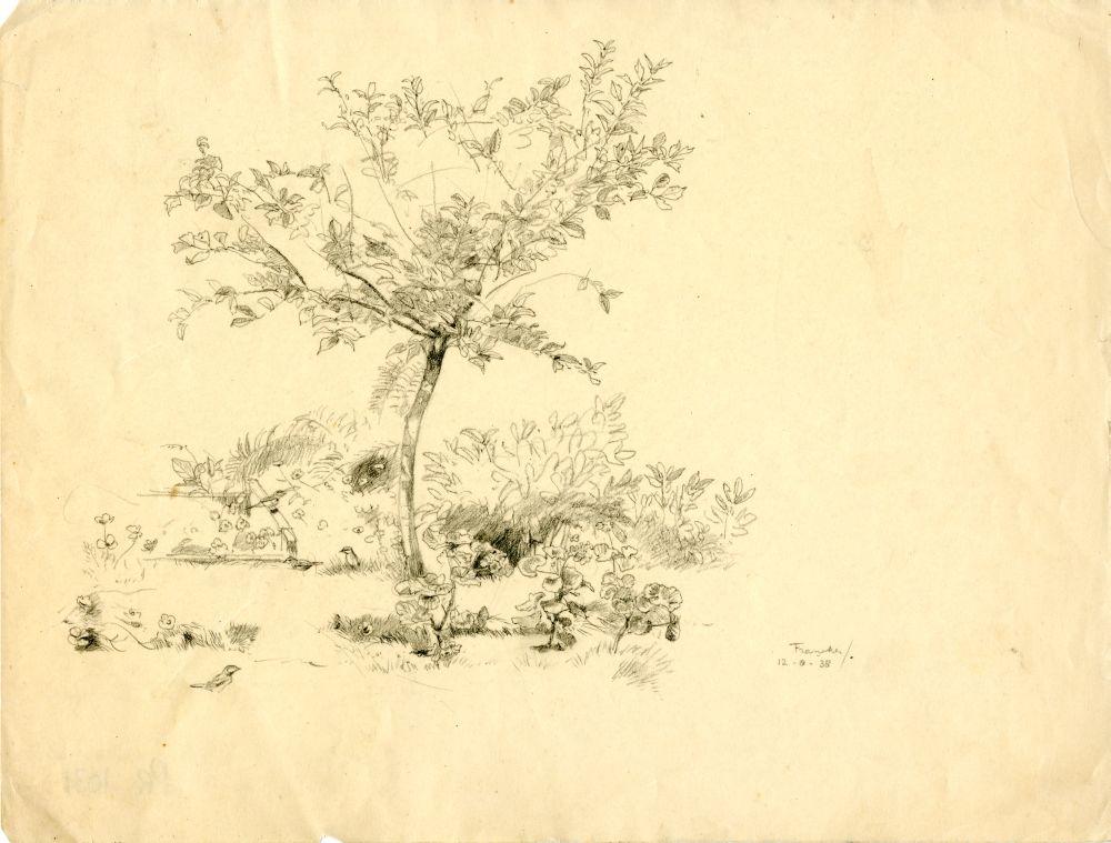 Tekening met potlood van een boom en planten in Franeker door Sjoerd Kuperus