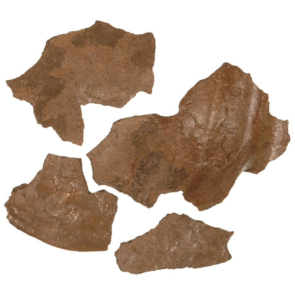 Bot: Wandbeen van een Wolharige Mammoet (fragmenten)