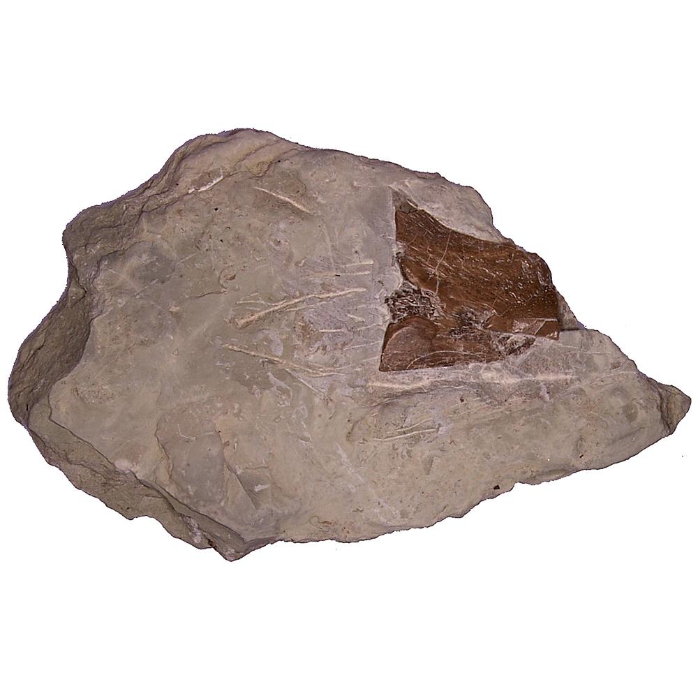 Matrix: Schedel van een Nothosaurus (fragment)