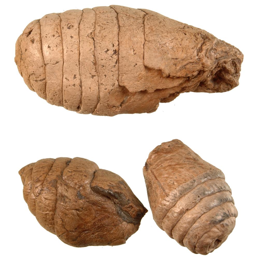 Fossiele uitwerpselen