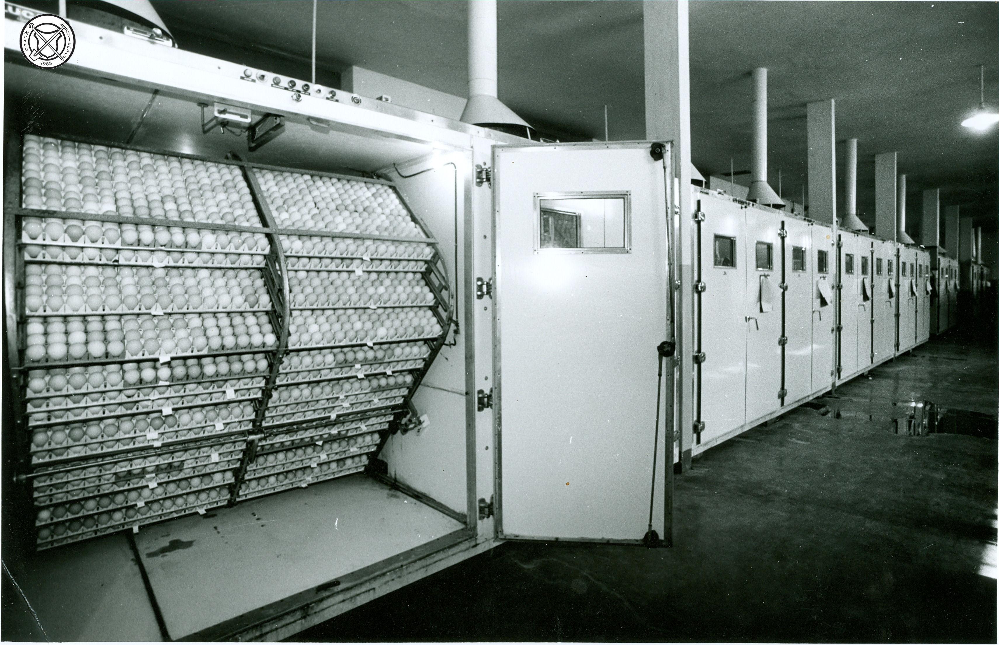Interieur van een broedmachine met eieren