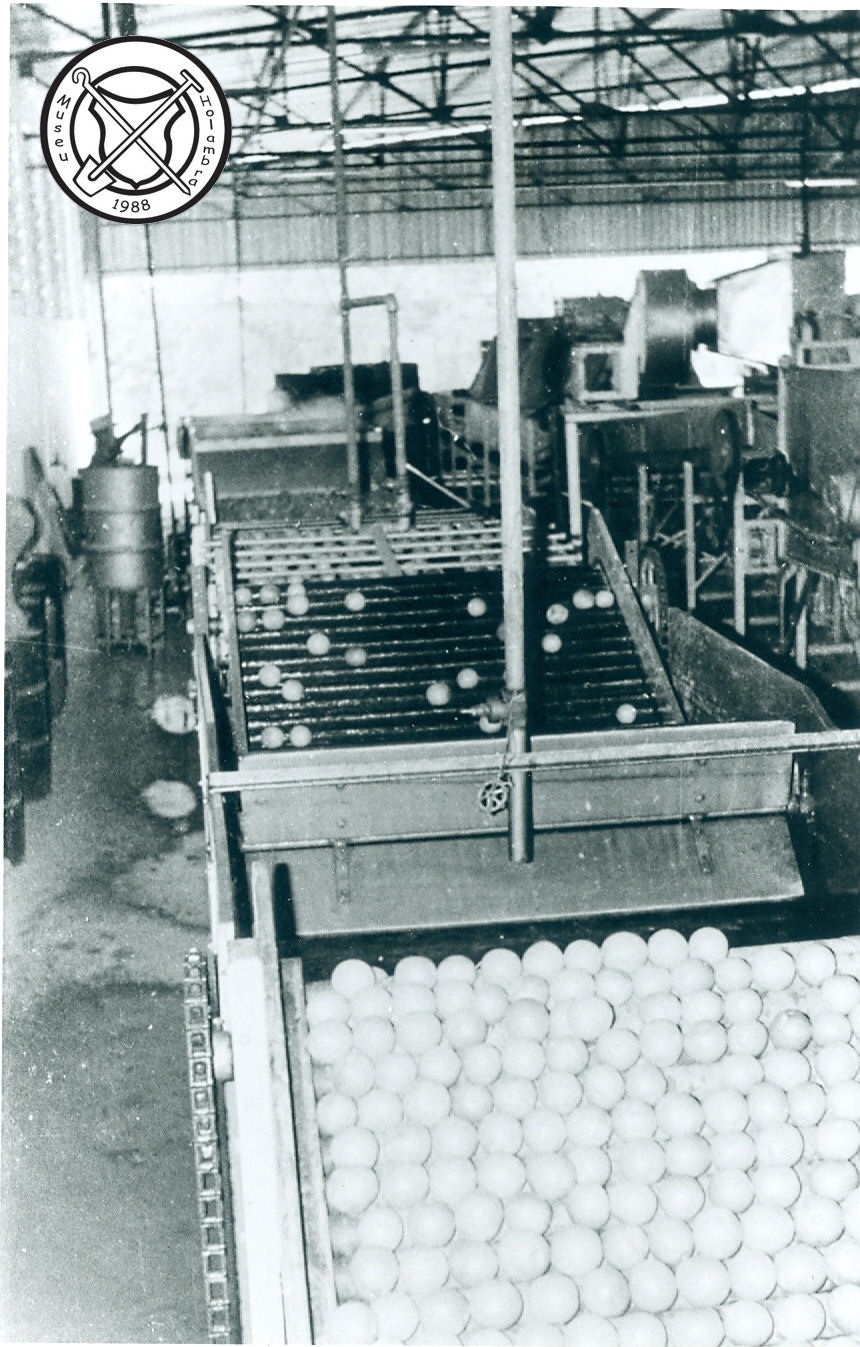 Sinaasappelen worden gewassen