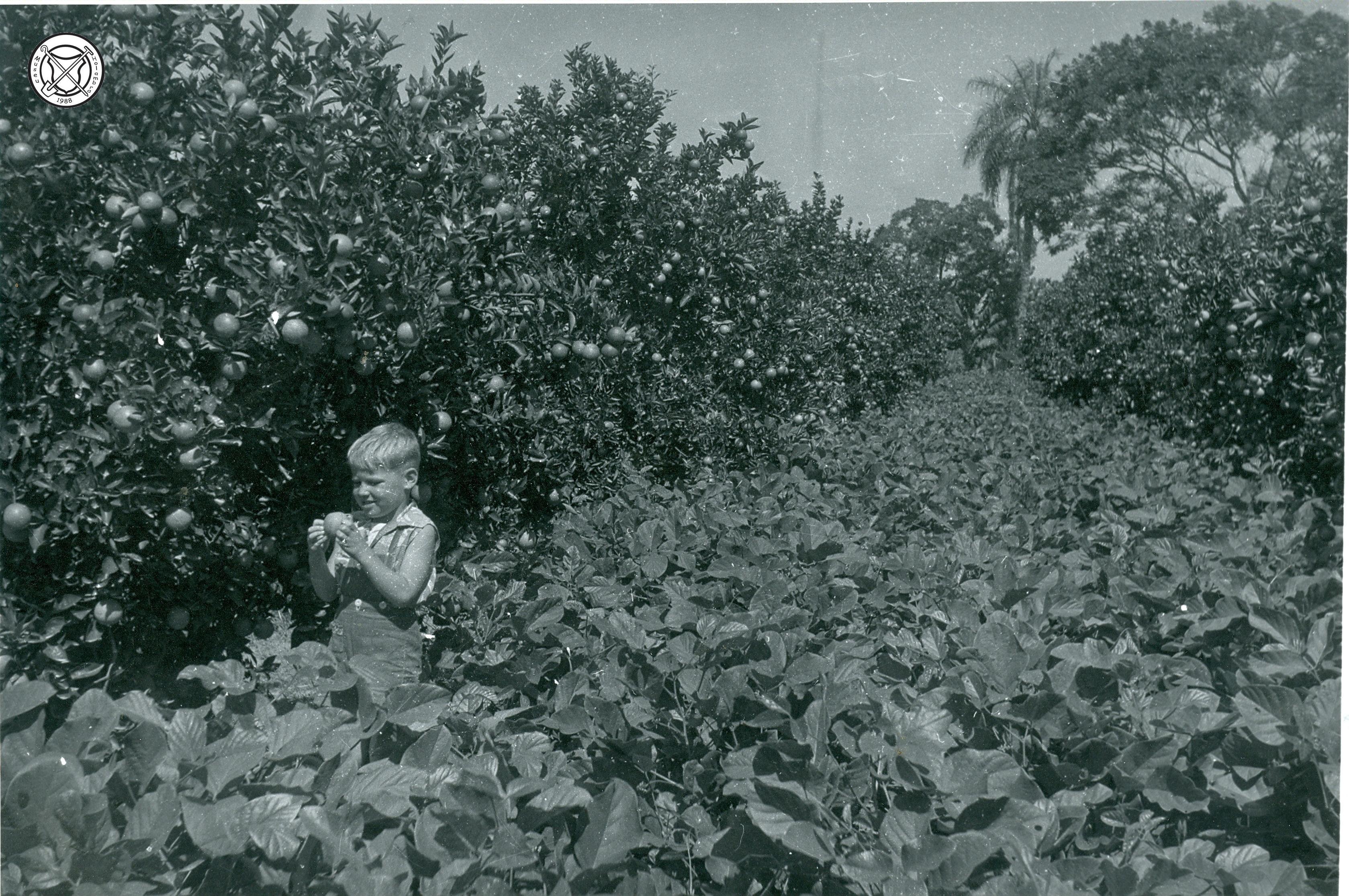 Kind tussen sinaasappelbomen en bonenplanten