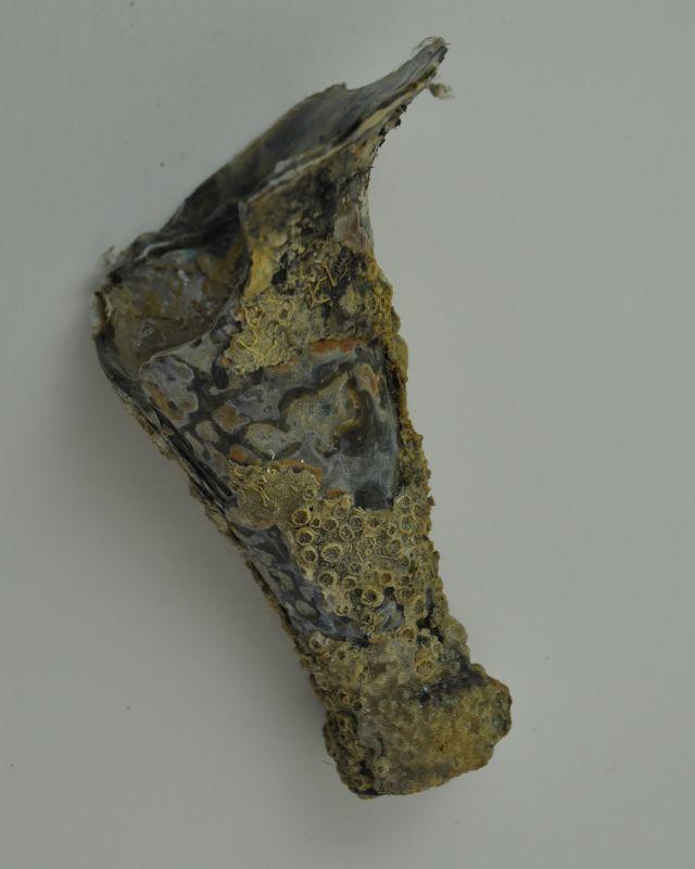 Fragment van een wijnfles, continentaal type. Afkomstig uit het VOC-schip 'Geldermalsen', vergaan in 1752.